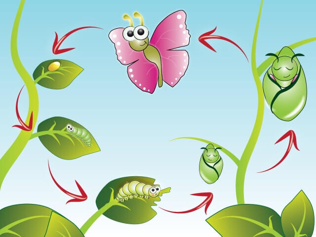 eyfs-life-cycle-of-a-butterfly.jpg